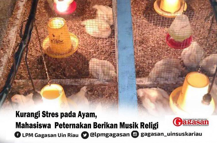 Kurangi Stres pada Ayam, Mahasiswa  Peternakan Berikan Musik Religi