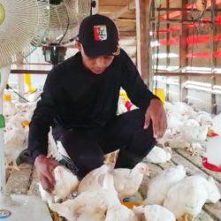 Mahasiswa Prodi Peternakan Wirausaha Ternak Ayam
